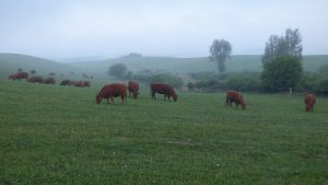 Extensive keeping of grazers